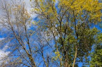 Autumn in Saint Paul (1 of 9)