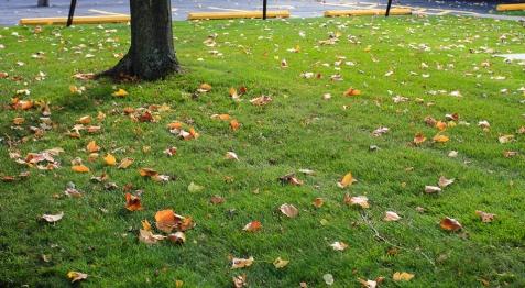 Autumn in Saint Paul (4 of 9)