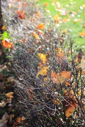 Autumn in Saint Paul (5 of 9)