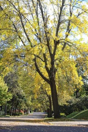 Autumn in Saint Paul (7 of 9)