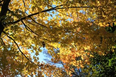 Autumn in Saint Paul (9 of 9)